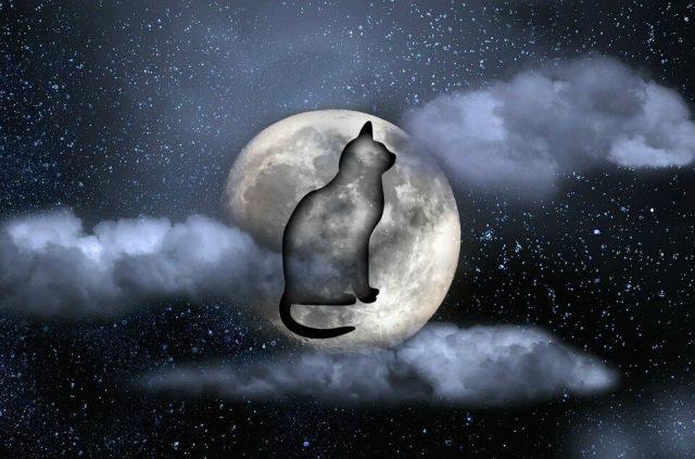 Madurar es darse cuenta de que el amor parece un perro, pero es un gato