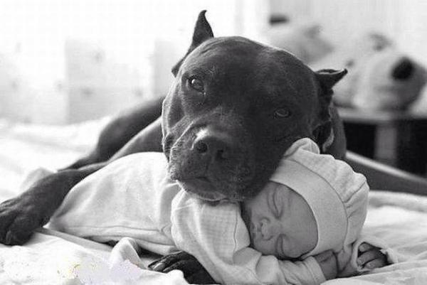 Las mascotas nos ayudan a sanar